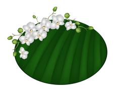 Beautiful Moon Orchids on Green Banana Leaf - stock illustration