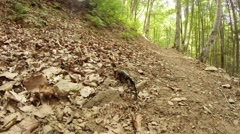 Salamander summer in the mountain forests of the Carpathians Stock Footage