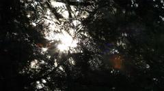 Abstract summer light through dark trees. Stock Footage