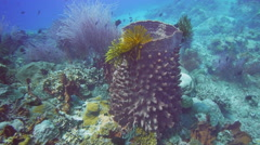 Barrel sponge and feather star Stock Footage