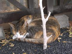 cat asleep - stock photo