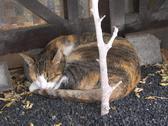 Stock Photo of cat asleep