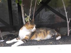 cat alert - stock photo