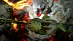 Cooking Piranha Fish on Fire Stock Footage
