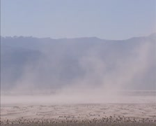 Sand and dust storm in Death Valley, Stovepipe Wells area, forming sand dunes Stock Footage