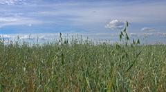 Green field under the summer sky - HD - stock footage