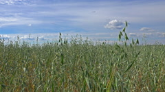 Grass green field under the summer sky - 4K - stock footage