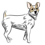 Parsons jack russell terrier Stock Illustration