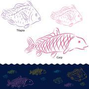 Tilapia and carp fish set Stock Illustration