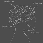 Blackboard human brain map drawing Stock Illustration