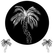 Palm tree drawing Stock Illustration
