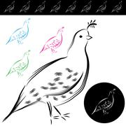 Stock Illustration of quail drawing