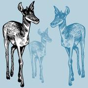 Antelope Stock Illustration