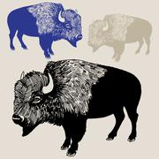 North american bison or buffalo Piirros