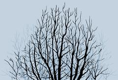 Bare tree limbs Stock Illustration
