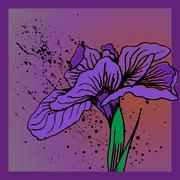 iris flower - stock illustration
