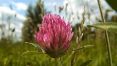 Grass and clover field Stock Footage