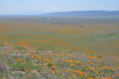 Vista of Poppy Field Antelope Valley Stock Photos
