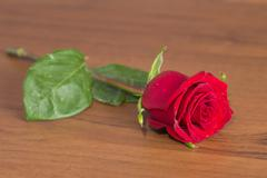 Stock Photo of rose