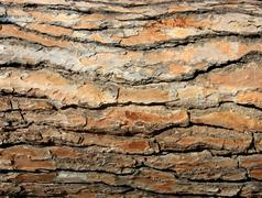 bark red brown - stock photo