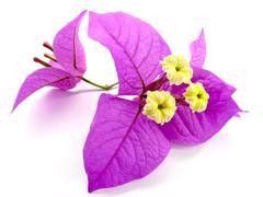 santa rita's flowers - stock photo