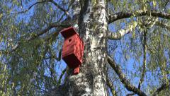 Old birch tree and two bird house in spring Stock Footage