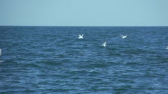 a flock of white birds fly fished in slow motion - stock footage