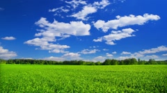 Summer landscape with green grass field and clouds on sky, time-lapse. - stock footage