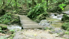 HD Tilt up of Old wood bridge in the raing forest, Phan-nga South of Thailand Stock Footage