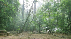 Stock Video Footage of HD Raining in the forest, rain forest in Phang-nga South of Thailand