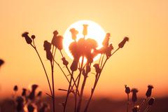 field of grass during summer sunset - stock photo