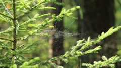 Stock Video Footage of weightless cobweb in forest