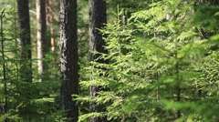 mysterious forest - stock footage