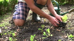 Close Up Of Man Planting Seedlings In Ground On Allotment Stock Footage