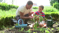 Father And Son Picking Carrots On Allotment Stock Footage