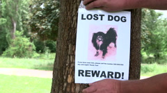 Pet owner put up poster Lost Dog offering a reward - stock footage