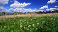 Pasture and wild flowers time lapse with wind and clouds Stock Footage
