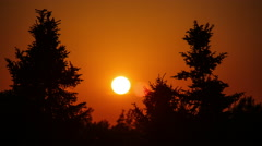 Solar disk setting between trees Stock Footage