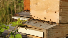 Bees Enter and Exit Hives Close Up Stock Footage