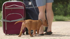 Puppy dog tied to suitcases Stock Footage
