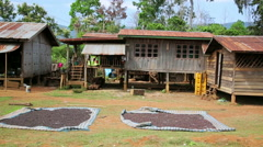 BOLAVEN PLATEAU, PAKSE, LAOS - MARCH 2014: coffee drying at home Stock Footage