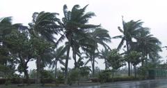 4K / HD Palmut Blow In Wind As Hurricane lähestyy Arkistovideo