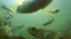 Underwater Close-up of Fish Stock Footage