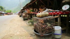 Alive Crab in Laos Local Market, around Vang Vieng Stock Footage