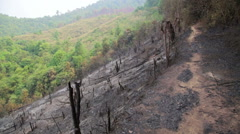 Stock Video Footage of Deforestation, after forest fire, natural disaster