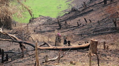 Akha Villagers Carry Back and Walking in Burnt Forest, Laos Stock Footage