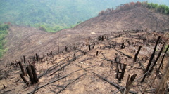 Deforestation, after forest fire, natural disaster - stock footage