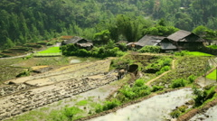 Farming plowing with ox, farm in Sapa, Vietnam, primitive tractor Stock Footage