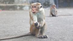 Monkey near the Golden Temple of Dambulla. Stock Footage