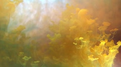 Yellow clouds of ink in water,  abstract background Stock Footage